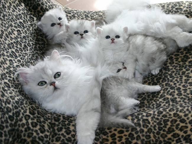 gatas-com-seus-filhotes-17