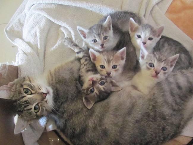 gatas-com-seus-filhotes-19