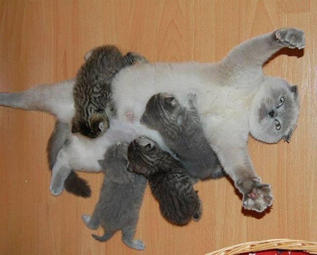 gatas-com-seus-filhotes-2