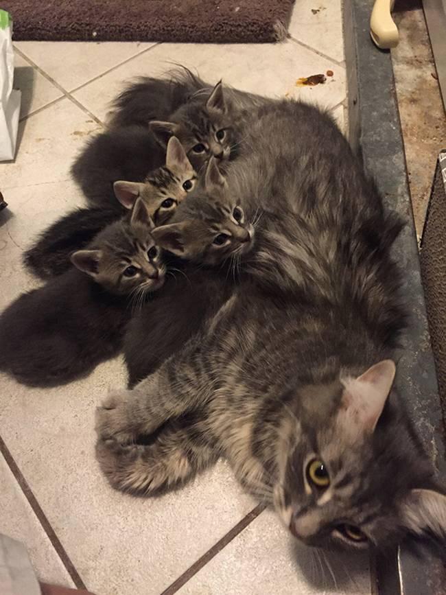 gatas-com-seus-filhotes-20