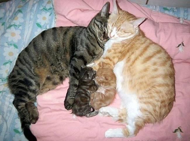 gatas-com-seus-filhotes-4