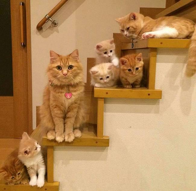 gatas-com-seus-filhotes-6