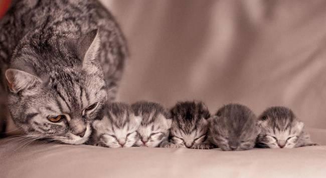 gatas-com-seus-filhotes-7