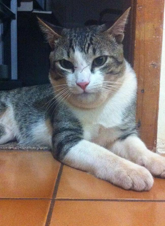 gato-abelha-leitora-lorena