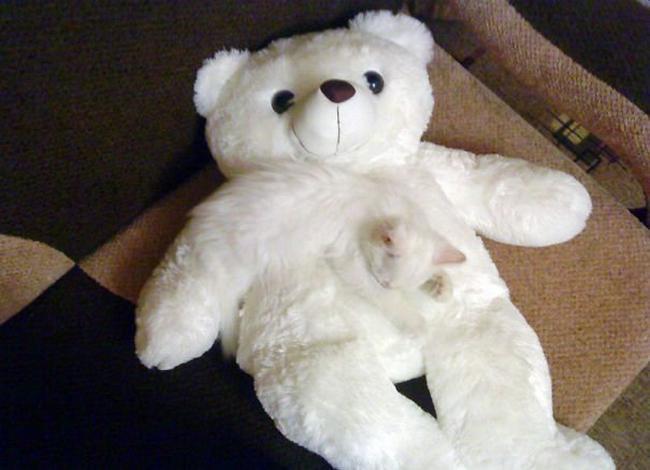 gatos-camuflados-1