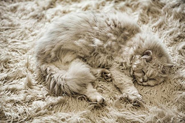 gatos-camuflados-10