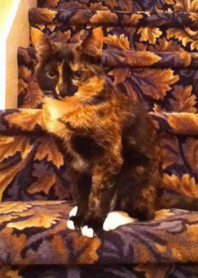 gatos-camuflados-12