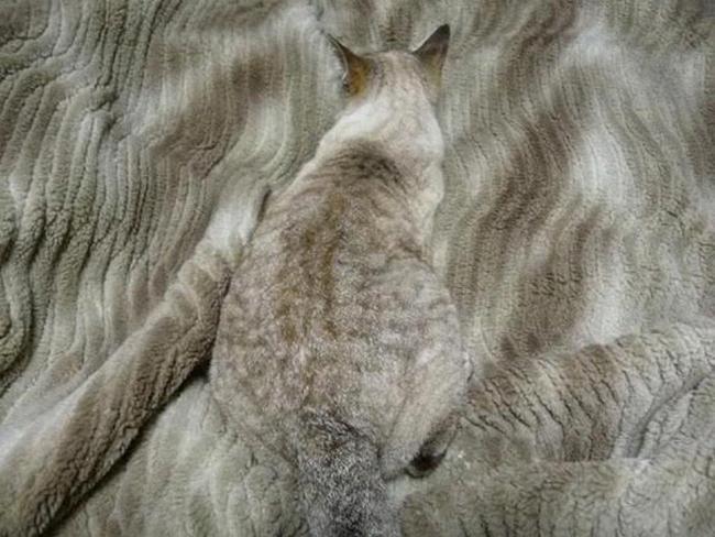 gatos-camuflados-15