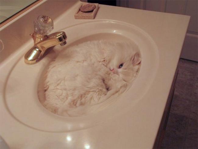 gatos-camuflados-17