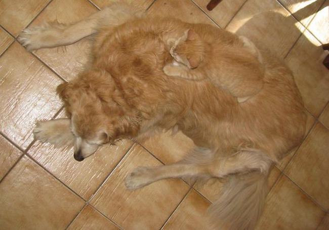 gatos-camuflados-3