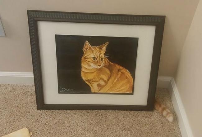 gatos-camuflados-4