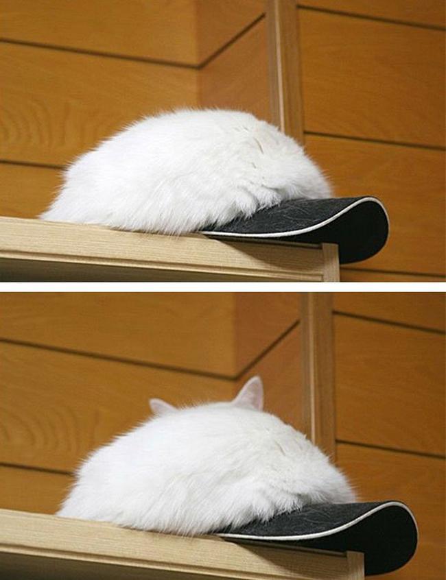 gatos-camuflados-6