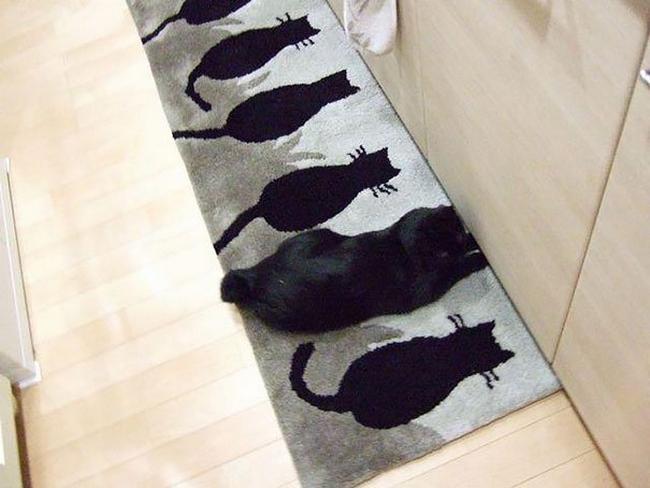 gatos-camuflados-7
