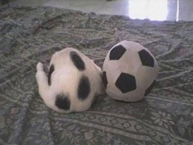 gatos-camuflados-8