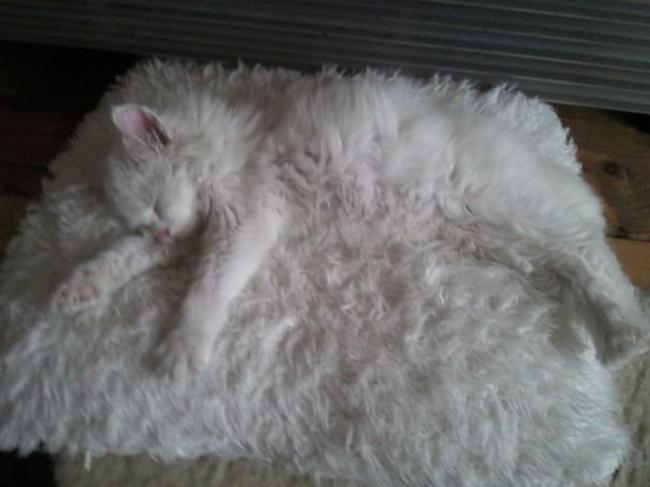 gatos-camuflados-9