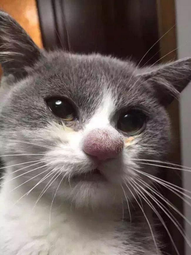 gatos-mexeram-abelhas-17