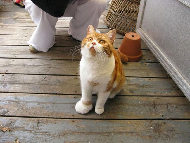 gatos-mexeram-abelhas-2