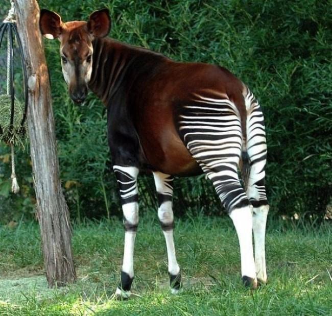 animais-inusitados-17