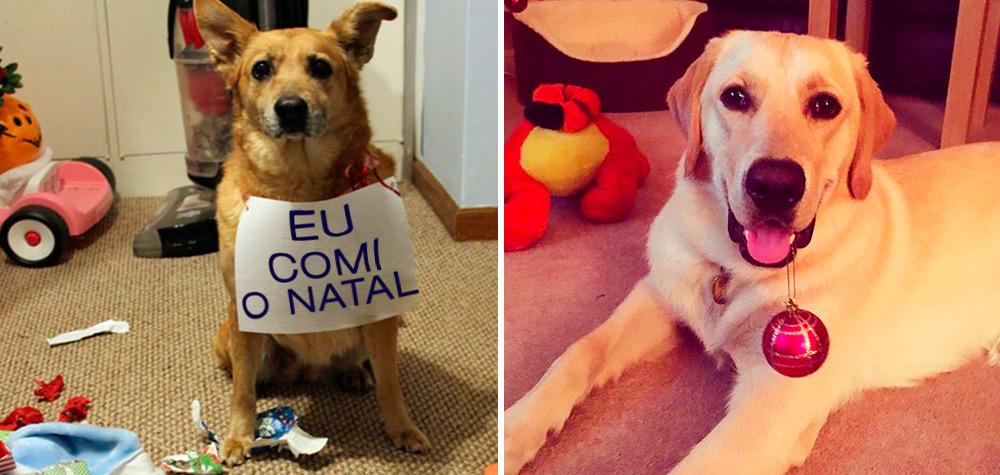 21 Cachorros que não ganharão presente do Papai Noel esse ano