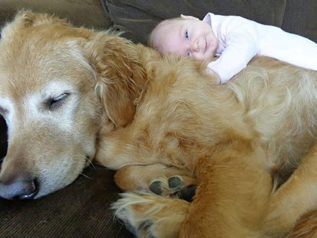crianças-precisam-de-animais-de-estimação-17