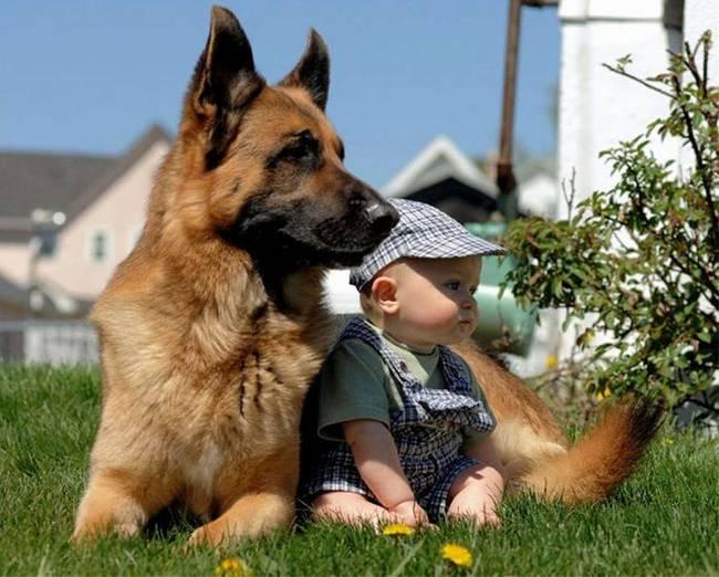 crianças-precisam-de-animais-de-estimação-21