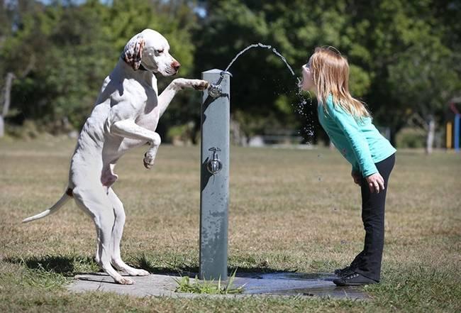 crianças-precisam-de-animais-de-estimação-22
