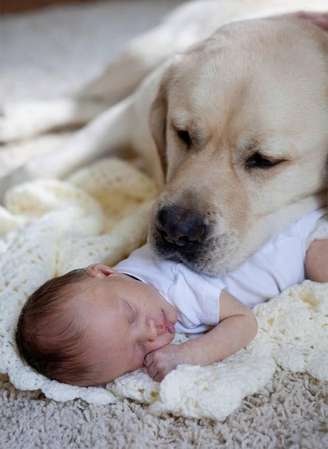 crianças-precisam-de-animais-de-estimação-26