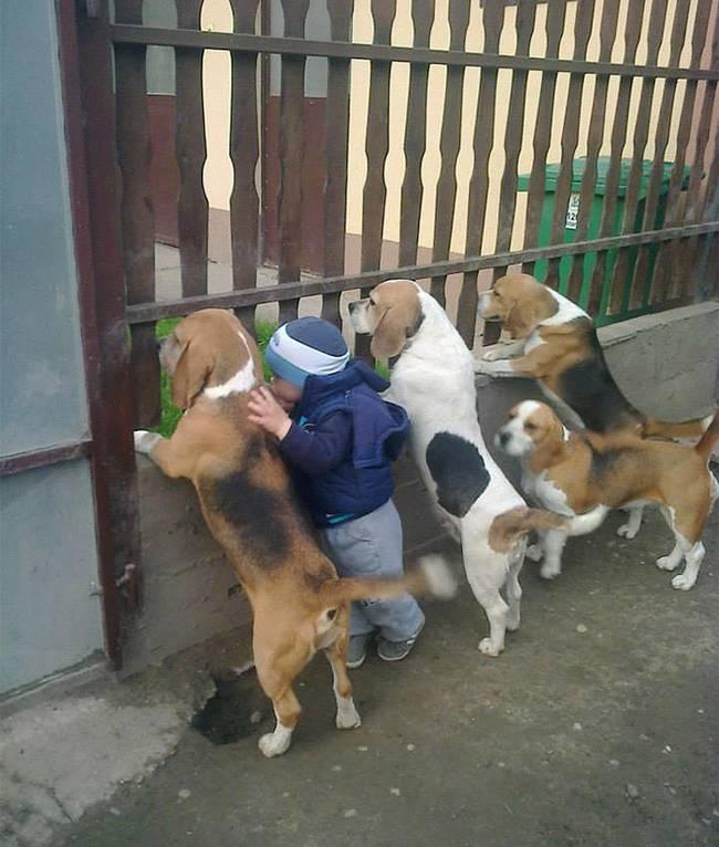 crianças-precisam-de-animais-de-estimação-6