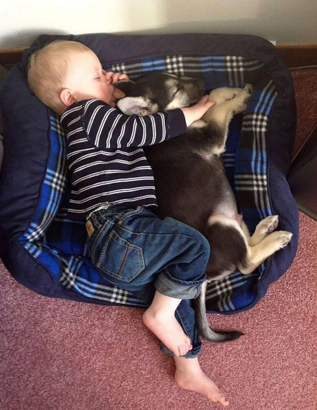 crianças-precisam-de-animais-de-estimação-8