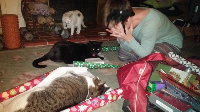 gatos-sem-espirito-natalino-1