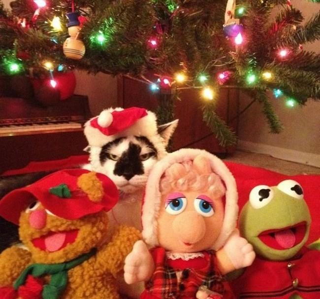 gatos-sem-espirito-natalino-10