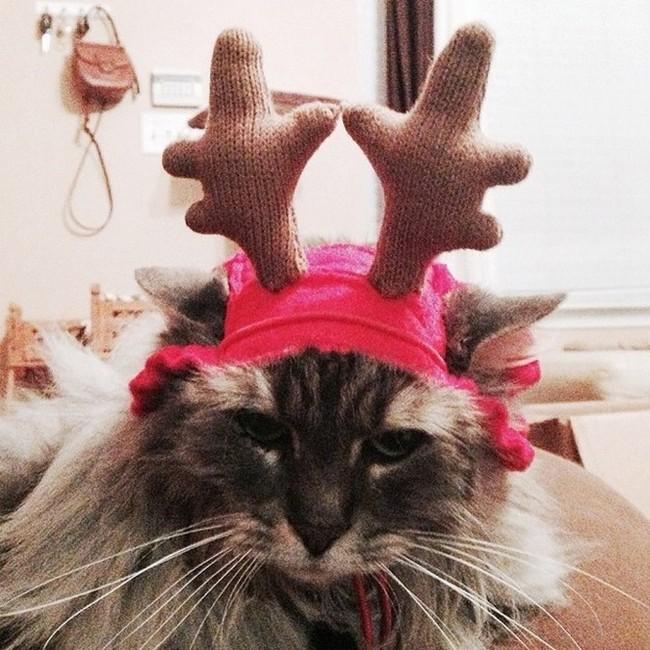 gatos-sem-espirito-natalino-12