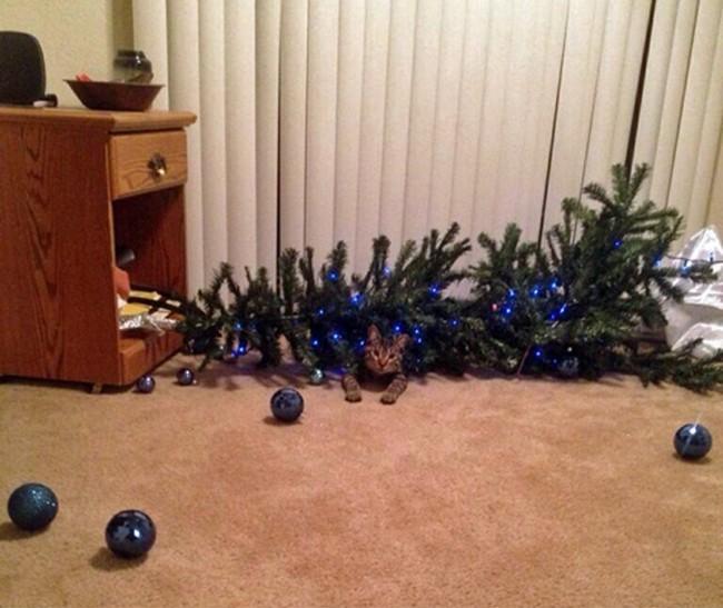 gatos-sem-espirito-natalino-13