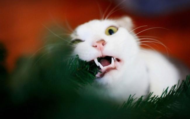 gatos-sem-espirito-natalino-14