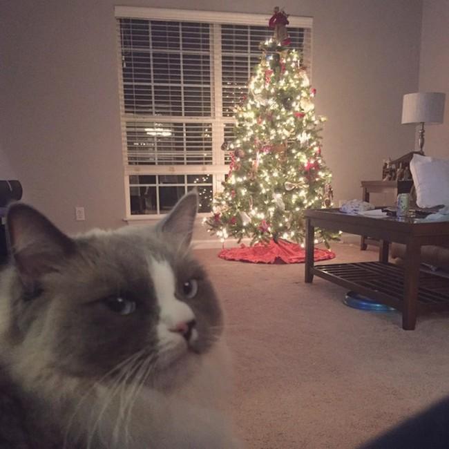 gatos-sem-espirito-natalino-15