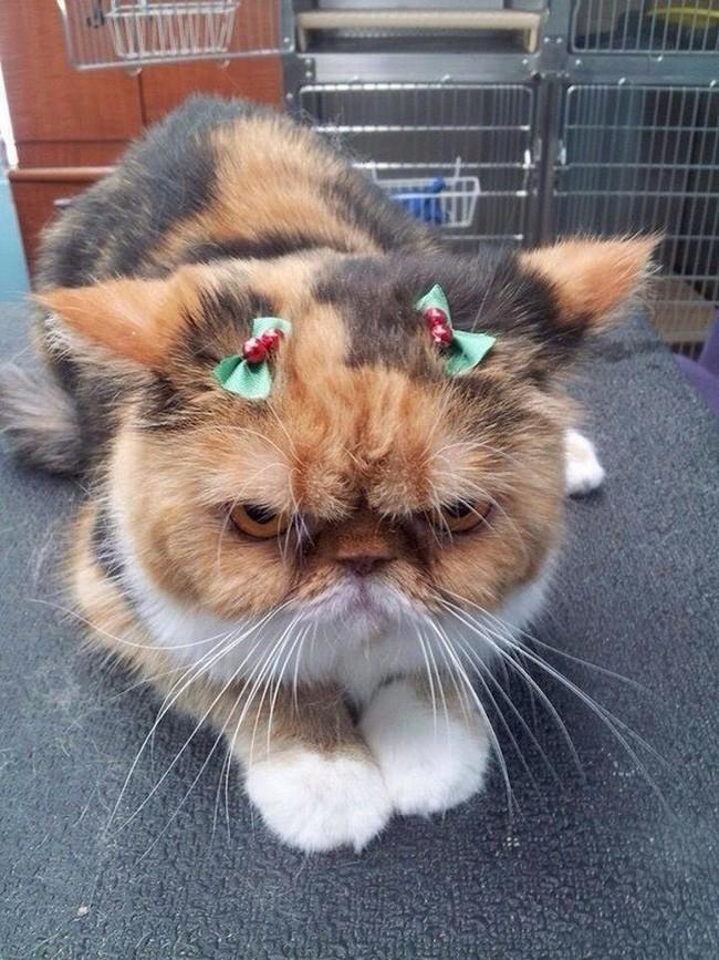 gatos-sem-espirito-natalino-16