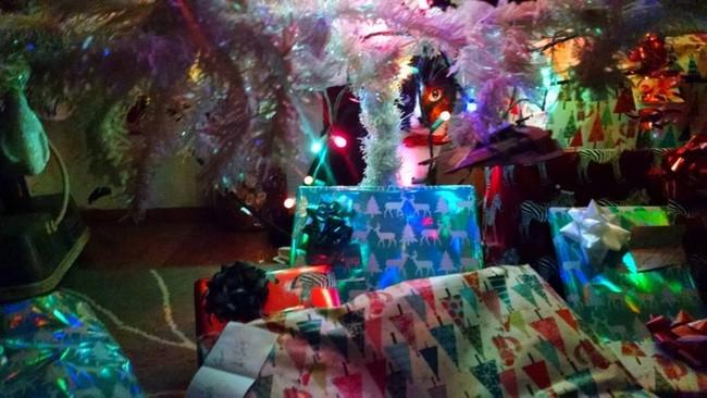 gatos-sem-espirito-natalino-18