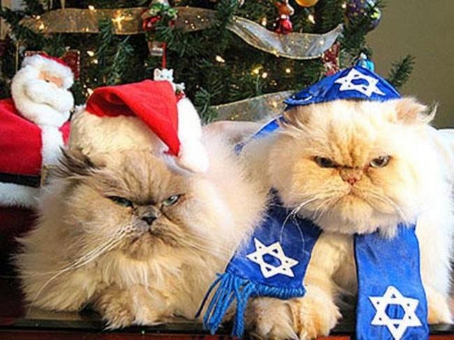 gatos-sem-espirito-natalino-19