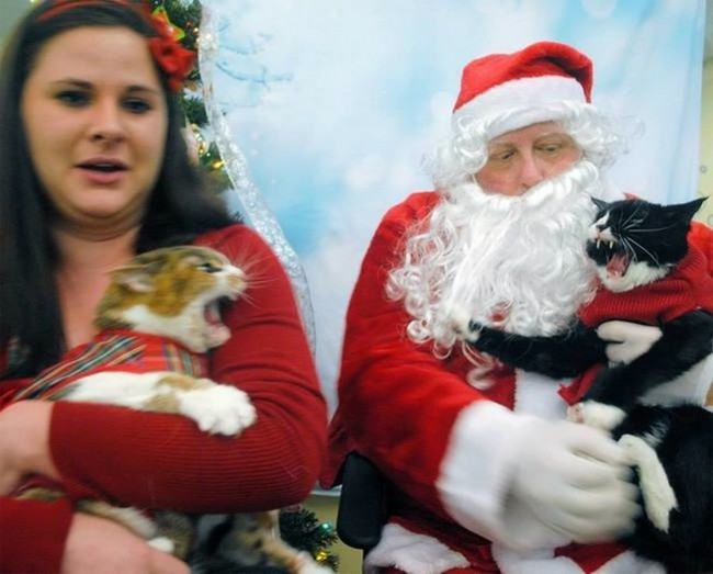 gatos-sem-espirito-natalino-2