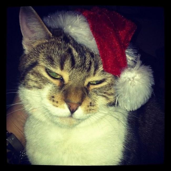 gatos-sem-espirito-natalino-3