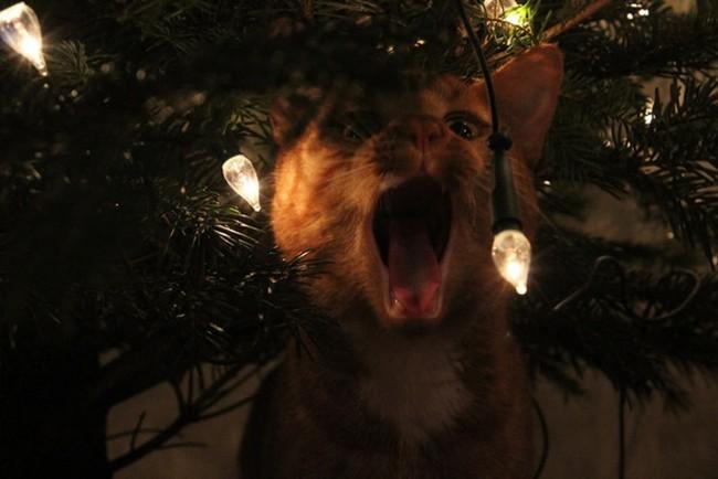 gatos-sem-espirito-natalino-4