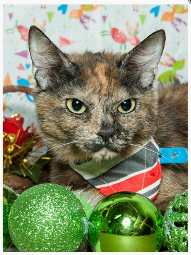 gatos-sem-espirito-natalino-6