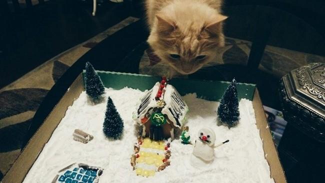 gatos-sem-espirito-natalino-8