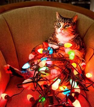 gatos-sem-espirito-natalino-xx