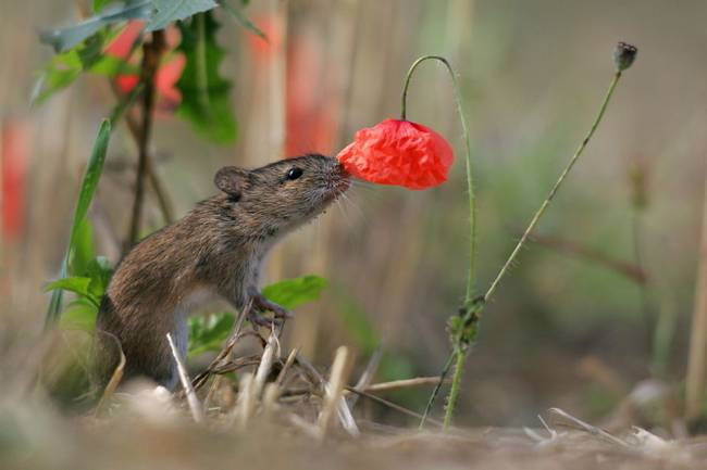 animais-cheirando-flores-10