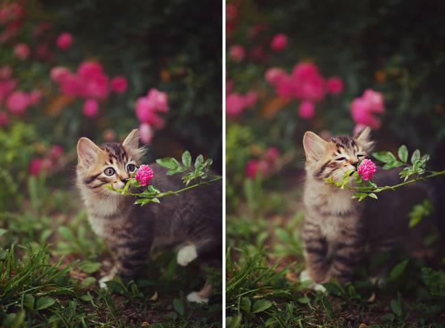 animais-cheirando-flores-11