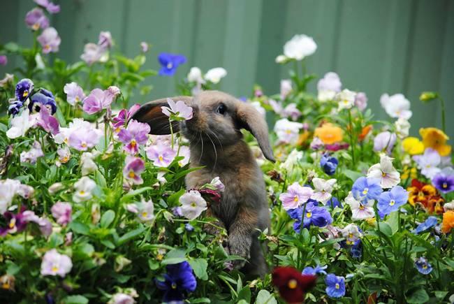 animais-cheirando-flores-14
