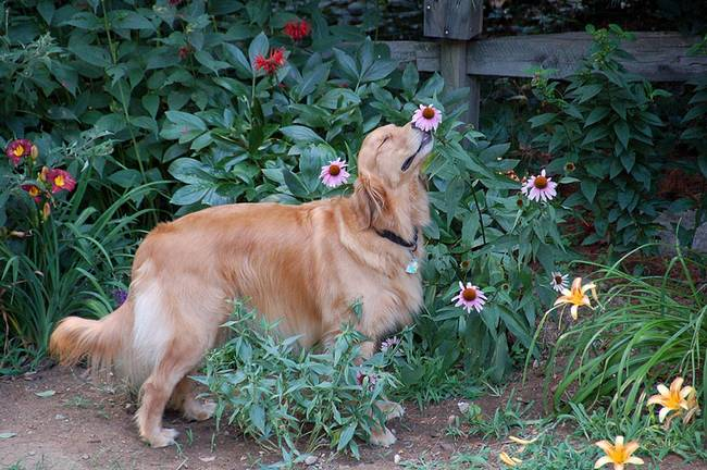 animais-cheirando-flores-15