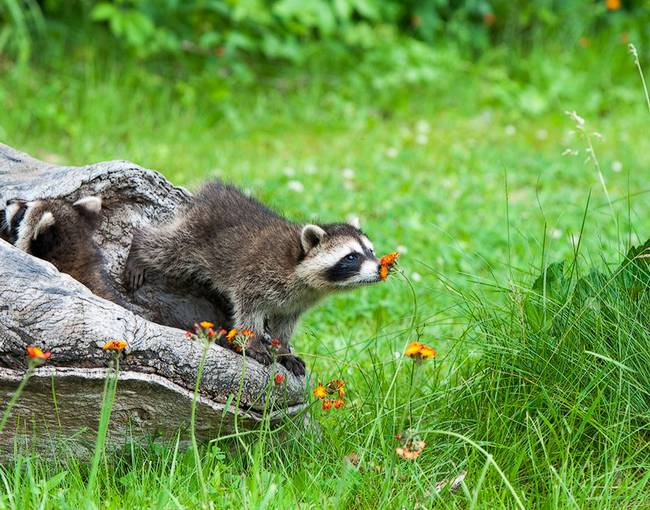 animais-cheirando-flores-2