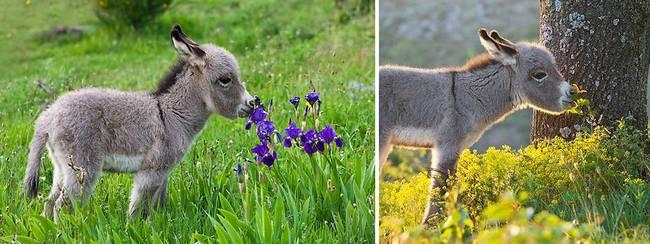 animais-cheirando-flores-3